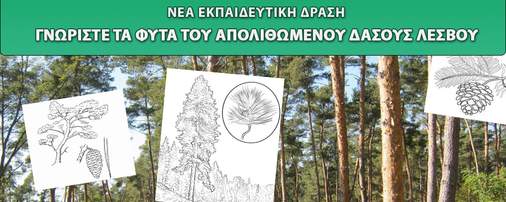 New Digital Educational Program: Discover the plants of the Lesvos Petrified Forest